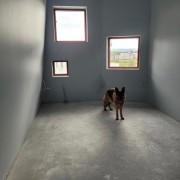 21-07-08 Hund i øvesal